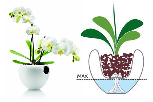 Большинство орхидей после цветения достаточно поливать 1-2 раза в месяц