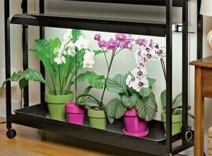 Температурный режим зависит от разновидности орхидей