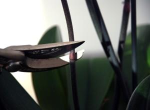 Наиболее удобный инструмент для обрезки - секатор