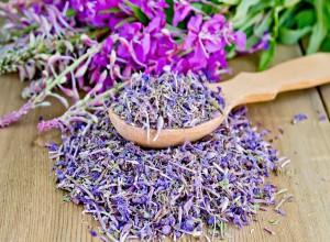 Иван-чай – кладезь полезных веществ и минералов