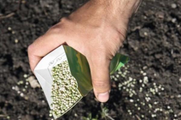Внесение удобрений в почву под посадку дыни