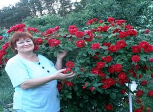 Обильность цветения растения, рост новых плетей, размер цветков - характеризует правильность ухода