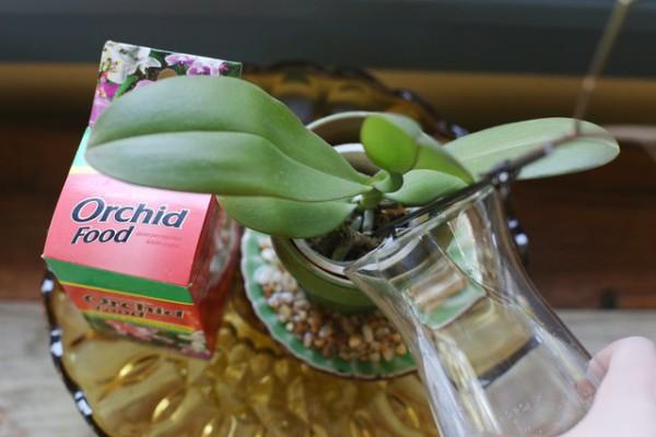 Удобрение для орхидей для цветения