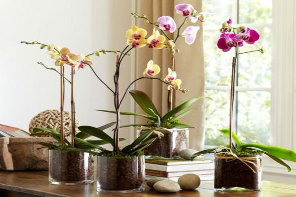 Для комфортных условий орхидеи необходим получать свет больше 12 часов в день