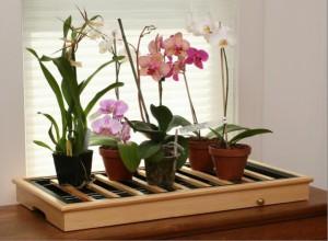 Нужно защитить орхидею от яркого солнца, поместив их в притененное место