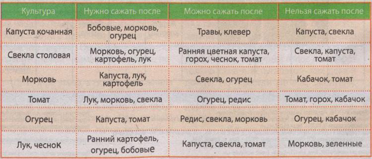 Таблица: что можно сажать после свеклы