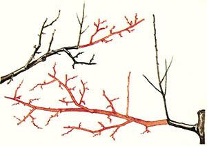 Осенняя обрезка сливы