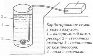 Барботирование семян перца (нажмите для увеличения)
