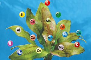 Elemente_Plante