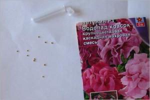 Как правильно подготовить семена и когда сеять петунию на рассаду: сроки и нюансы ухода за молодыми ростками