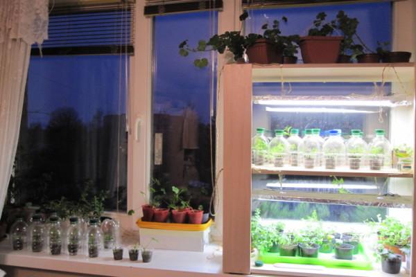Подсветка на этапе выращивания рассады благоприятно скажется на росте и здоровье растений