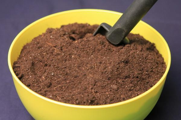 Для посева петуний лучше всего подходит почвенная смесь из перегноя, дерновой и листовой земли и торфа, смешанных в равных пропорциях
