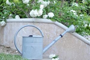 Растения-важно-хорошо-поливать-768x954