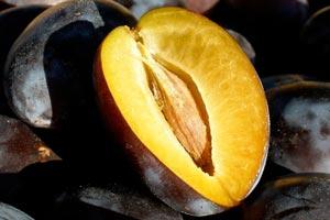 Слива алыча Оцарк премьер описание выращивание уход