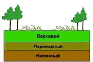Структура торфяной залежи