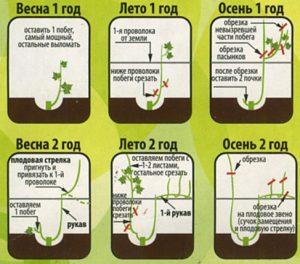 Схема обрезки (нажмите для увеличения)