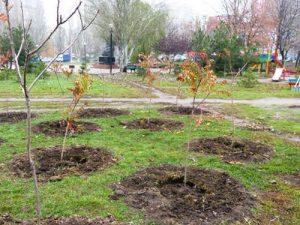 Как вырастить дерево каштана