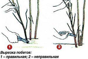malina-osen3
