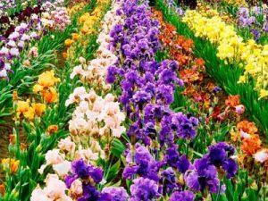 Осенние цветы для клумбы