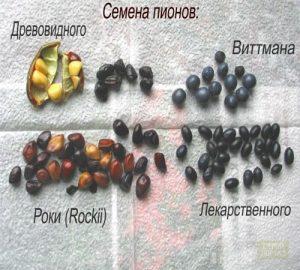 Размножение пионов