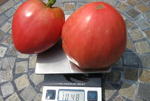 tomat-rozovyj-med6666