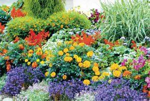Вечно цветущий сад