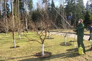 Весенняя обработка плодовых деревьев и кустарников сада от вредителей и болезней: чем проводить опрыскивание в марте (видео, график)