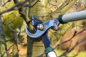 Обробка дерев восени від шкідників