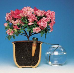Поилвать цветы дома