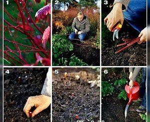 как размножать растения