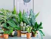 домашние растения