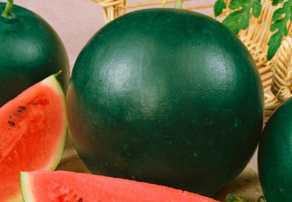 самые вкусные сорта арбуза