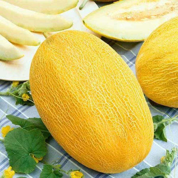 Дыня сорта Сладкий ананас