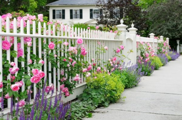 Крашеный забор с цветами