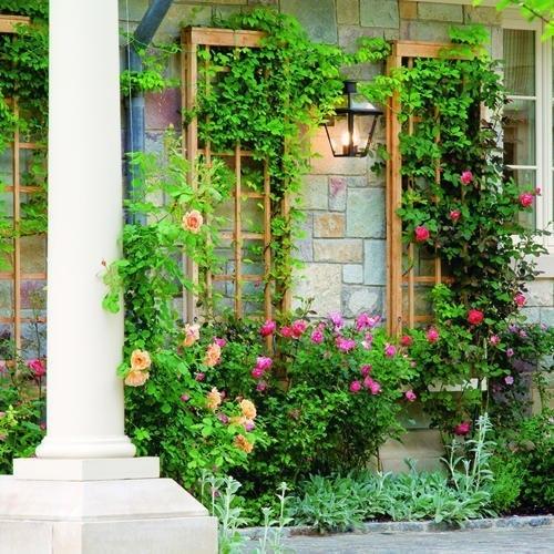 Цветы на стене и фонарь