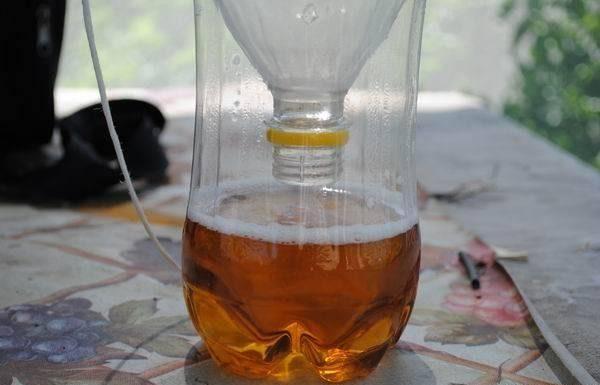 ловушка для насекомых из бутылок
