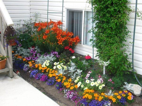 Цветники на даче вдоль дорожки