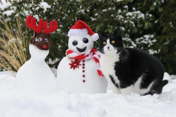 Санта-Клаус, олень и кот