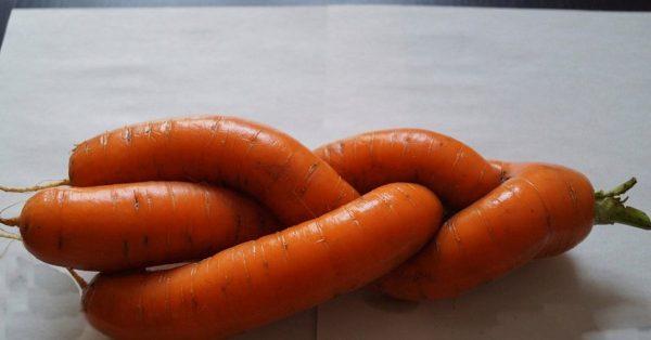 Морковь-косичка