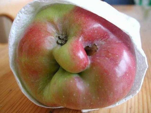 Яблоко-лицо старушки
