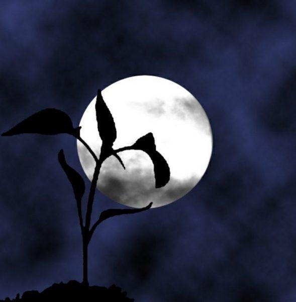 лунный посевной календарь на апрель 2019