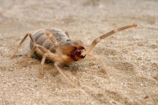 жуткие насекомые планеты