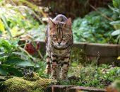 Кошка среди растений