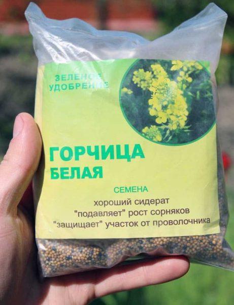 посев горчицы весной