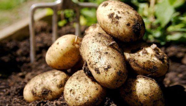 прогревание картошки