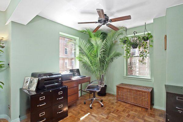 Пальма в кабинете