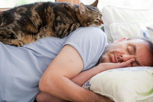 Кошка лежит на спящем хозяине