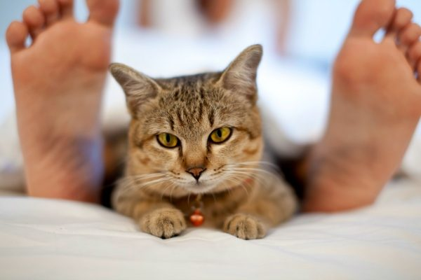 Кошка лежит в ногах у хозяина