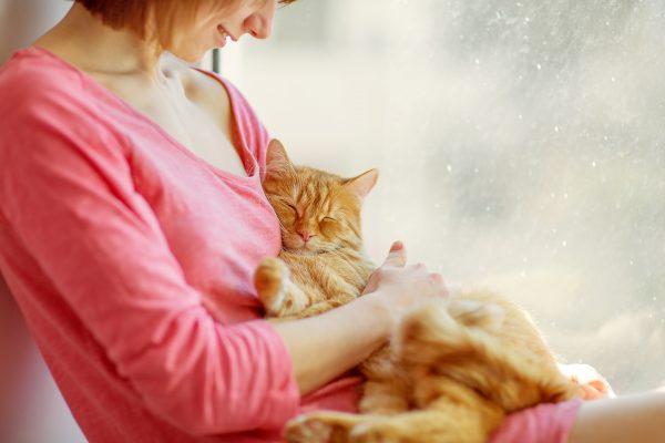 Кот спит на руках у хозяйки
