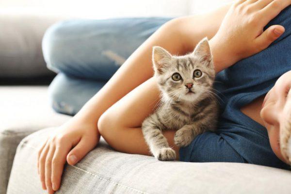 Котёнок лежит на руке у хозяина